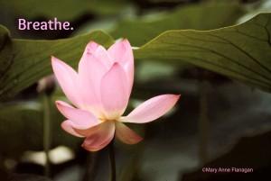 flower breathe